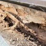 白蟻の脅威 診断事例 ホームインスぺクション